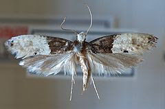 Carpet Moths? Give David Marks a call
